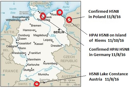 germany-h5n8
