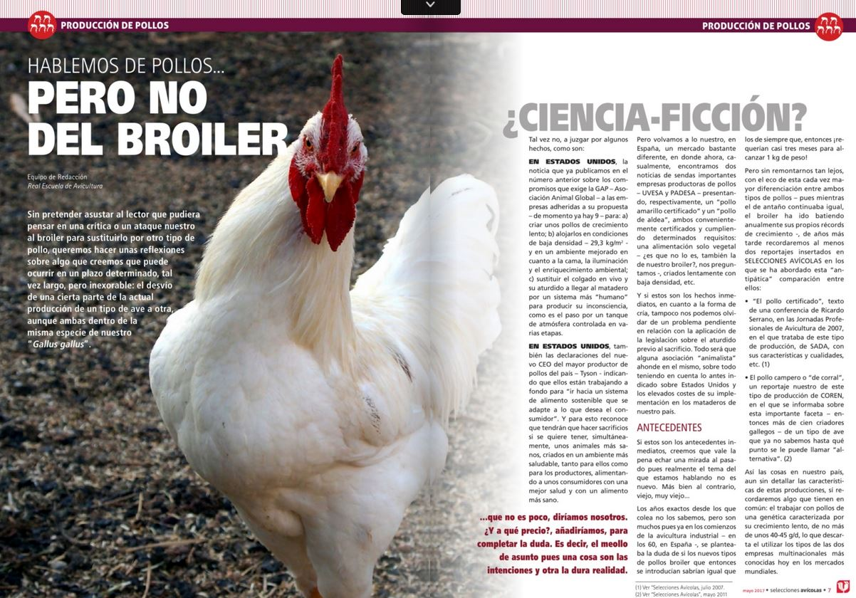 POLLO-ALTERNATIVOS-ECOLOGICOS-AL-BROILER