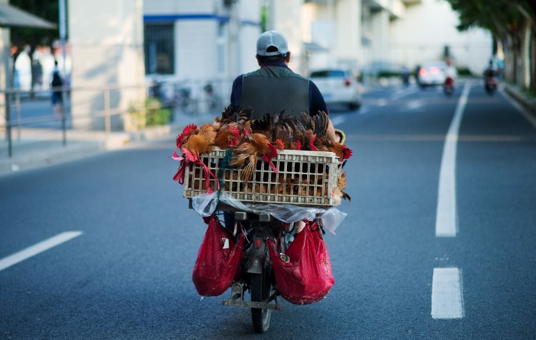 A man transports chicken on his scooter in Shanghai on August 6, 2014. AFP PHOTO / JOHANNES EISELE / AFP PHOTO / JOHANNES EISELE